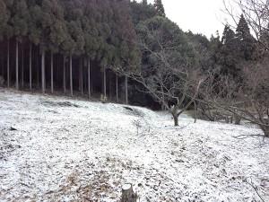 2013年3月3日の栗畑