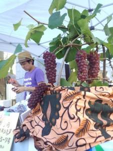 1-ブドウを愛してやまないブドウ農家G-grapefarmの小林さん