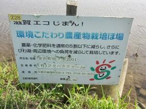 3-彦根田植え4