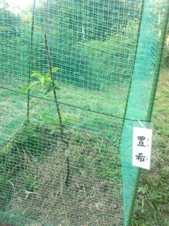 3-豊希20130904-1
