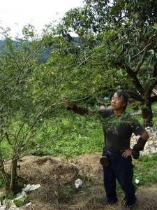 6-山椒の木と中上さん